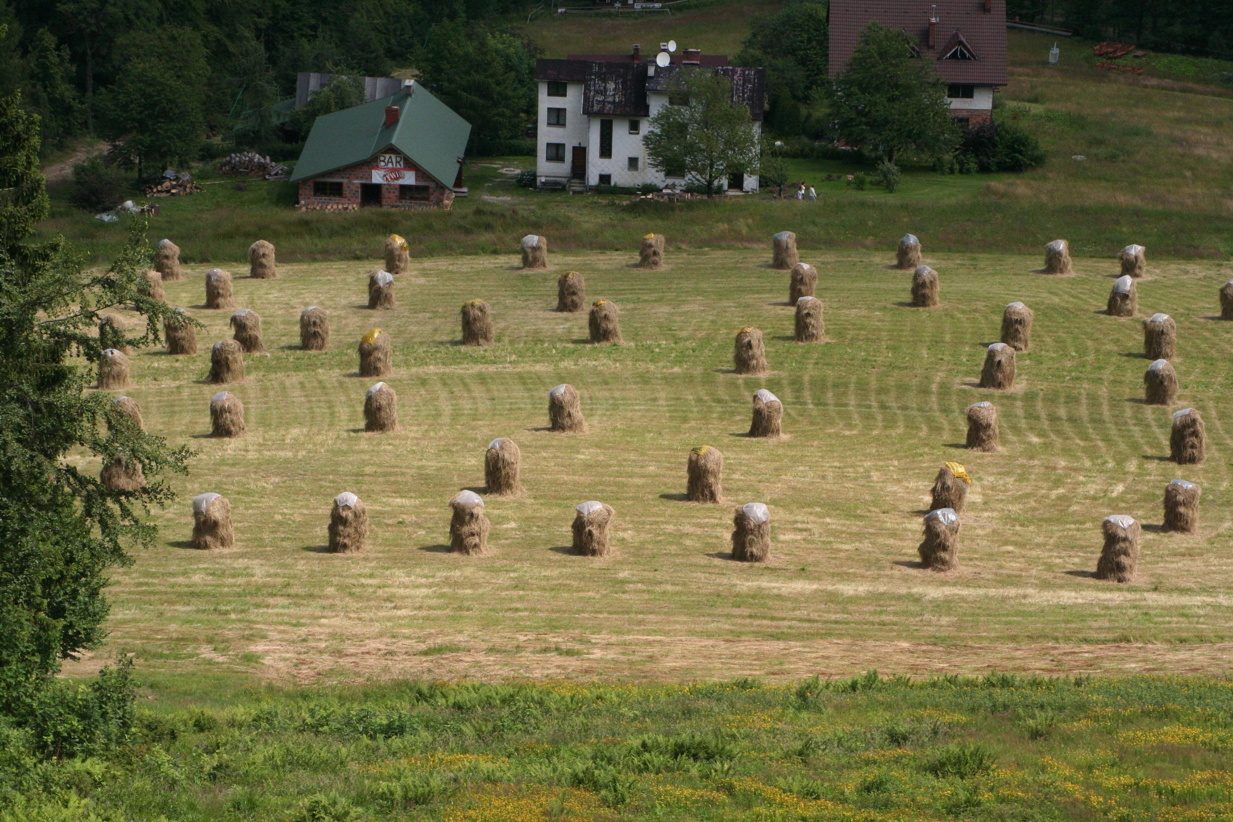 Nowe zasady w rolnictwie w Niemczech
